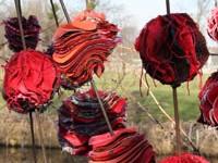 Vurig bloeiend brandkruid (Phlomis)
